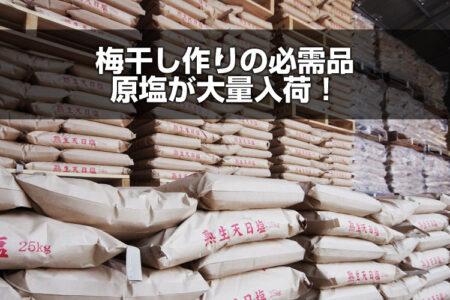 梅干し作りの必需品原塩が大量入荷!